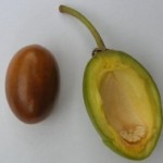 Shea nut 3 150x150 Consult ASBI for assistance in any of the following consultation topics